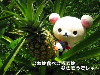 korichan-blog170.jpg