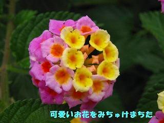 korichan-blog216.jpg