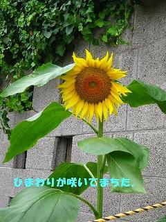 korichan-blog226.jpg