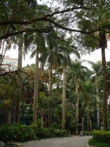 植物園のヤシの木