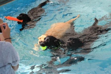 みんなで泳ぐ