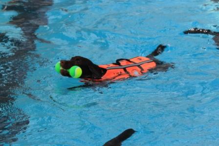 クオレちゃん初泳ぎ