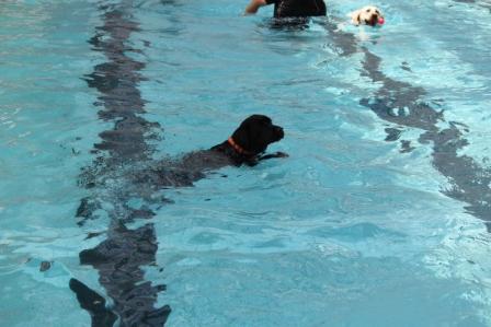 サンディーちゃんの泳ぎ