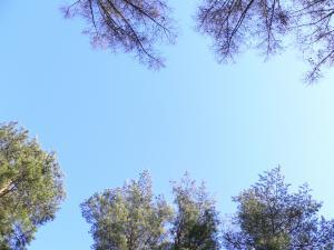 初春の空-明野キャンプ場2