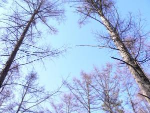 初春の空-明野キャンプ場1