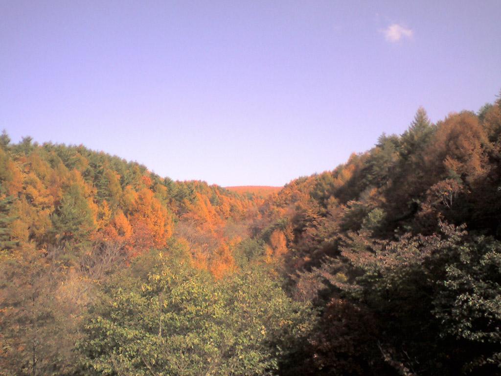 富士見高原の紅葉(1)