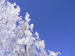 斑尾高原の樹氷