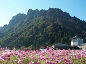 妙義山麓のコスモス畑(1)