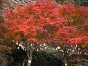 名栗の紅葉(2005年-2)