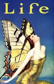 LIFE 蝶々の羽