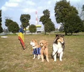 久しぶりに公園にいきました