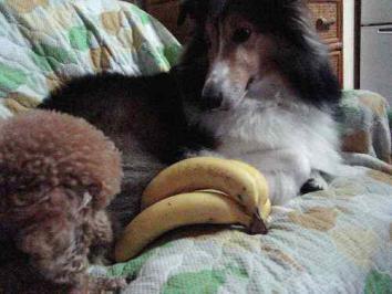 バナナは体にいいの