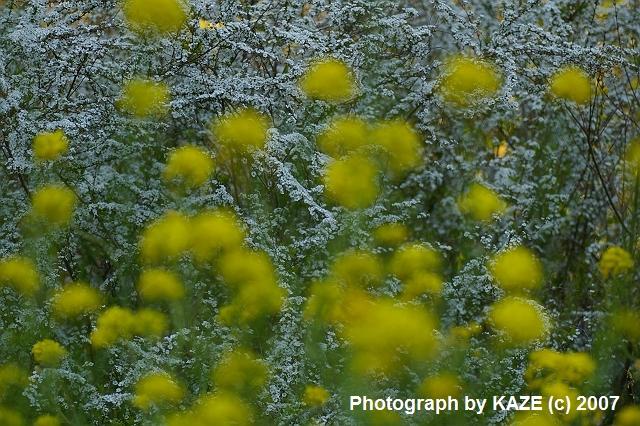 花沢の里に咲く花