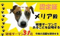 破壊ダーマン No.31