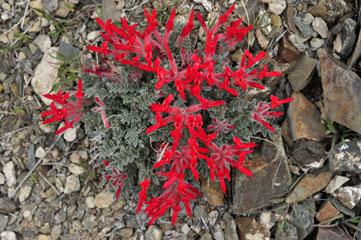 blog Eastern Sierra Nevada_DSC0166-4.5.11 (1).jpg
